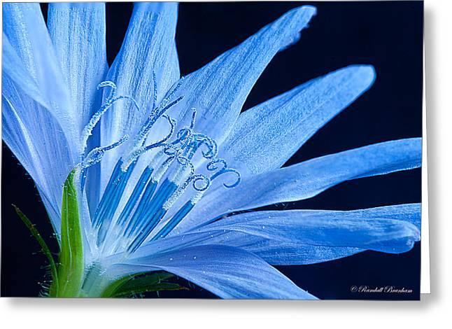 Greeting Card featuring the photograph Pistil's Of Chicory by Randall Branham