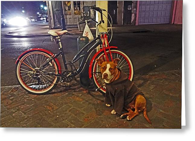 Pit Bull In A Hoodie In The French Quarter Of New Orleans Greeting Card