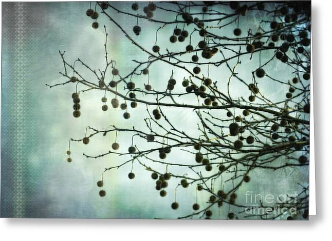 Plane Beauty - London Plane Tree Greeting Card by Jay Taylor