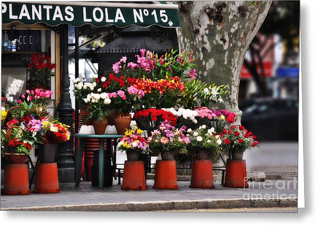 Plantas Lola Seville Greeting Card by Mary Machare