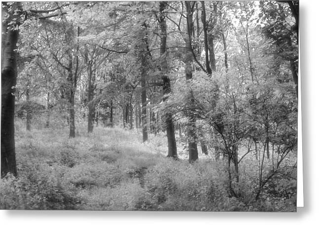 Platinum Forest Greeting Card by Sarah Couzens
