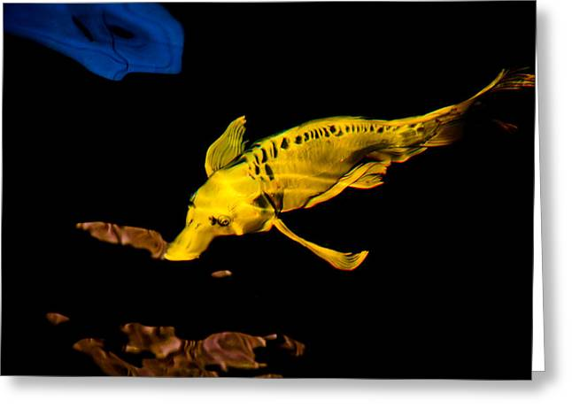 Platypus Fish Greeting Card by Chua  ChinLeng
