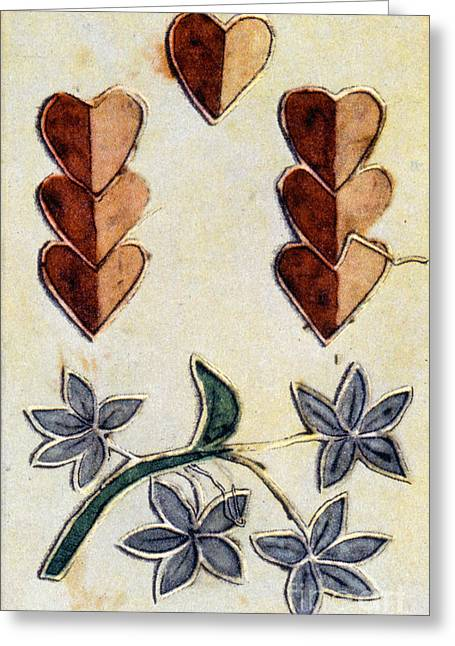 Playing Card, C1700 Greeting Card by Granger