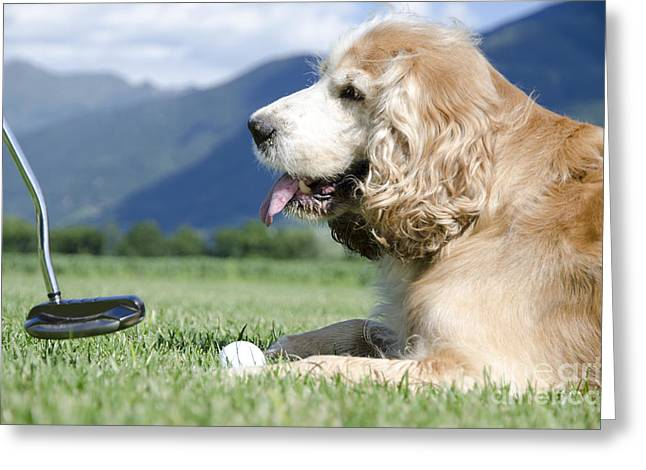 Playing Golf With A Dog Greeting Card by Mats Silvan