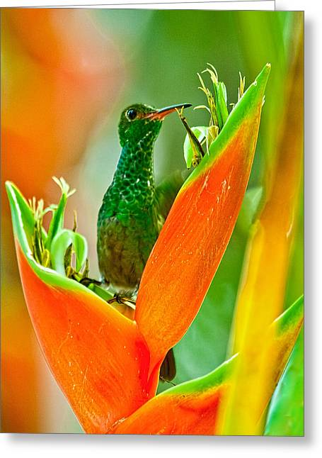Greeting Card featuring the photograph Plenty Of Nectar by Susi Stroud
