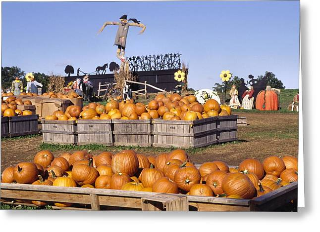 Plenty Of Pumpkins Greeting Card by Sally Weigand