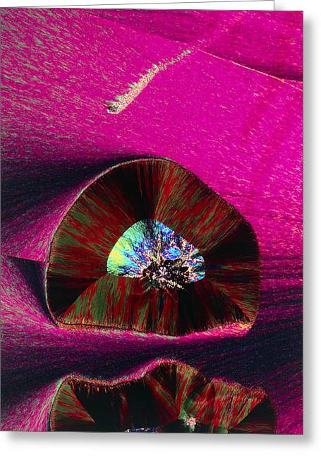 Plm Of Crystals Of Progesterone Greeting Card by Sidney Moulds