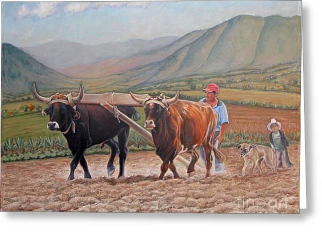 Ploughing In Ocotlan Greeting Card by Judith Zur