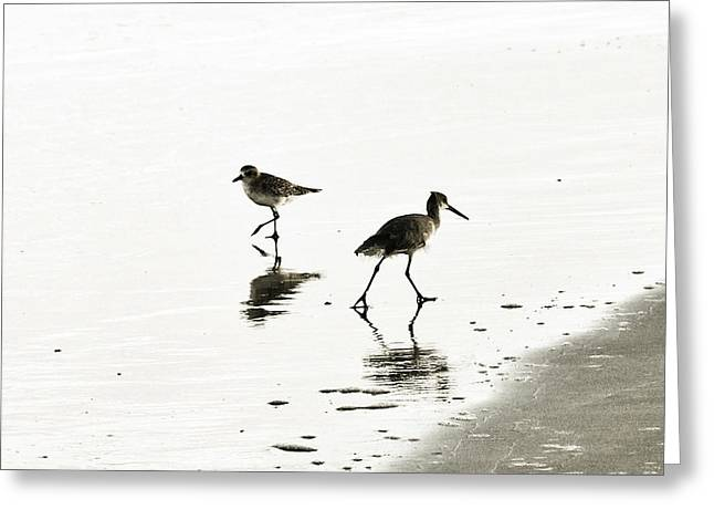 plover and Godwit Greeting Card