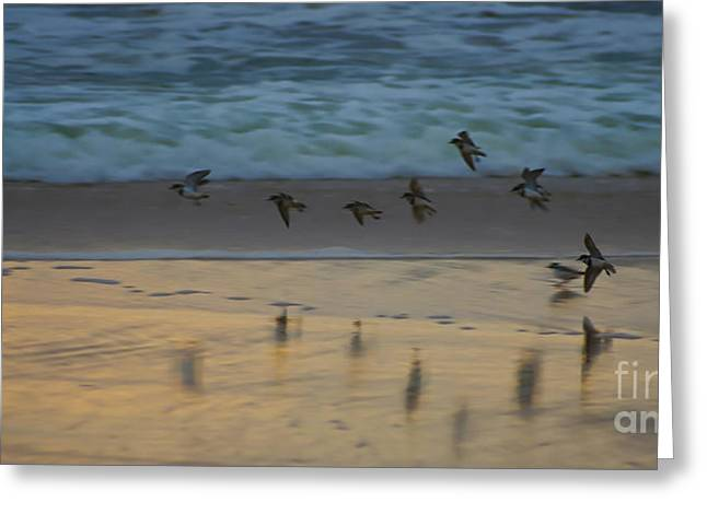 Plovers At Play On A Stormy Morning Greeting Card