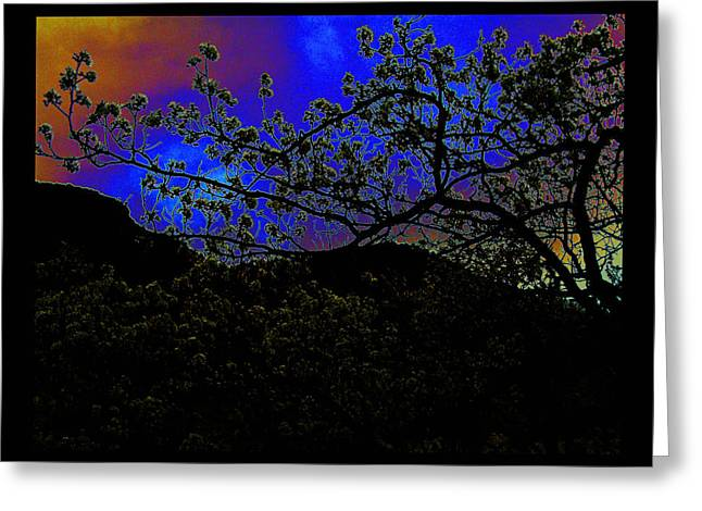 Greeting Card featuring the photograph Plum Grove At Dusk by Susanne Still