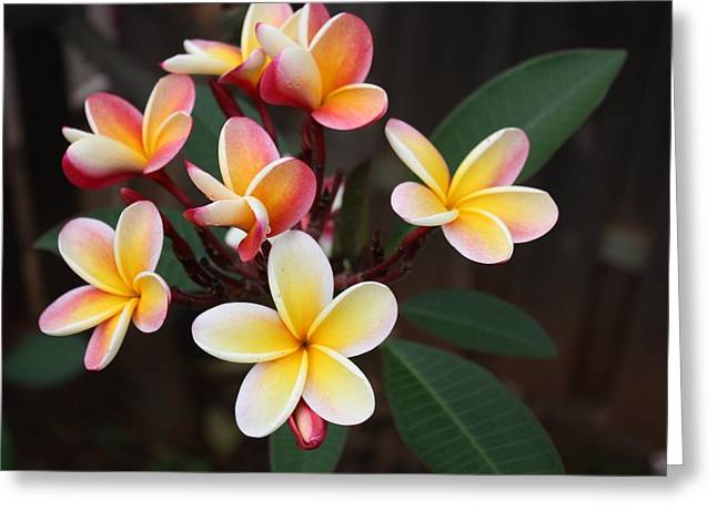 Plumaria Of Red And Yellow Greeting Card by Craig Wood