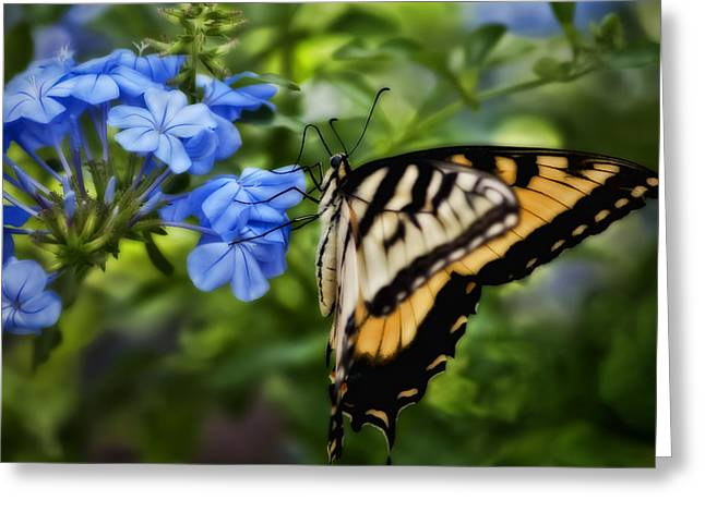 Plumbago And Swallowtail Greeting Card