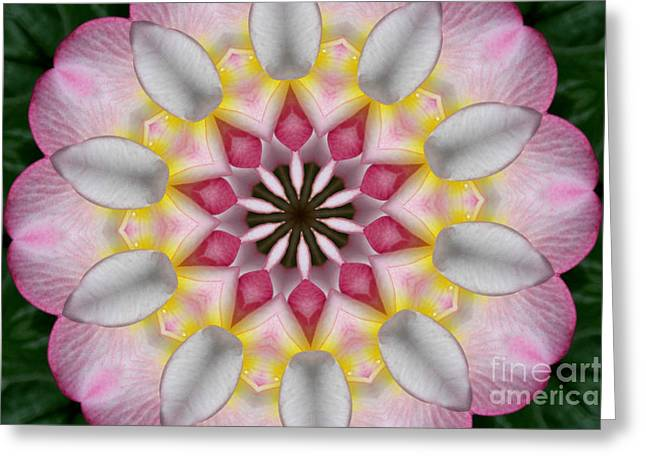 Plumeria 3 Greeting Card