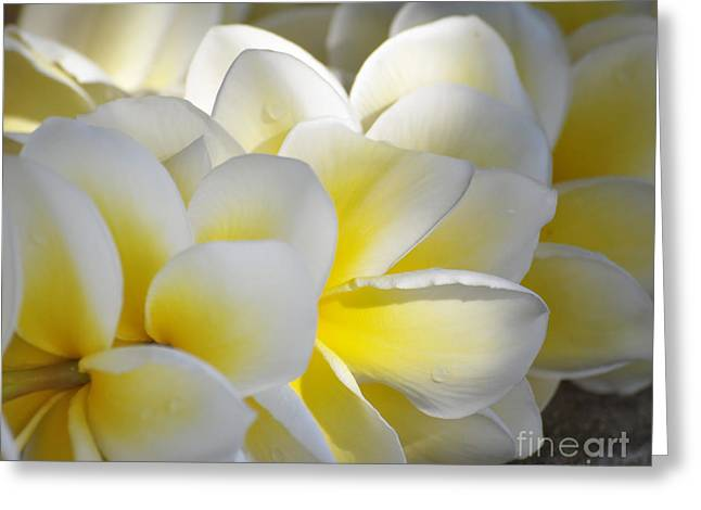 Plumeria Flower Lei Greeting Card