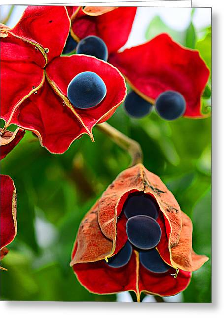 Pods Greeting Card by Michelle Armstrong