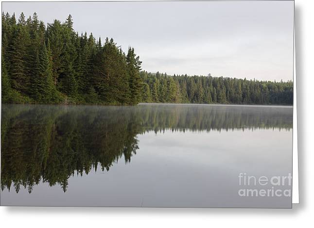 Pog Lake Tree Line Greeting Card by Chris Hill