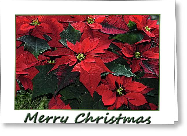 Greeting Card featuring the photograph Poinsettia Christmas  by Geraldine Alexander