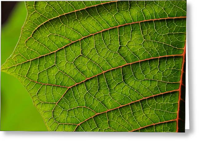 Poinsettia Leaf I Greeting Card