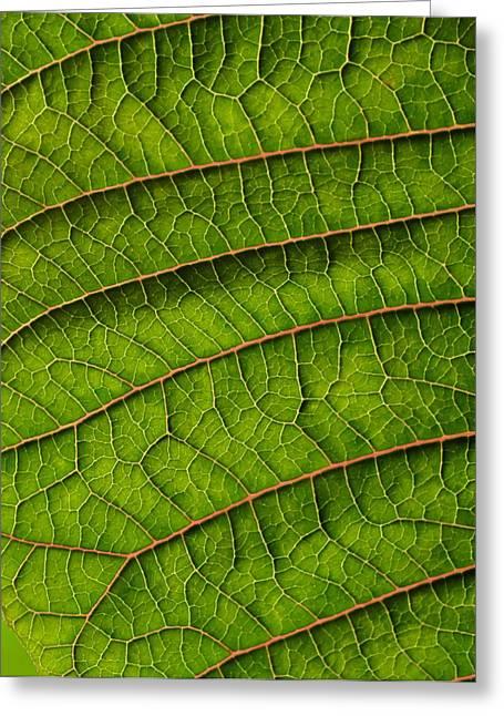 Poinsettia Leaf II Greeting Card