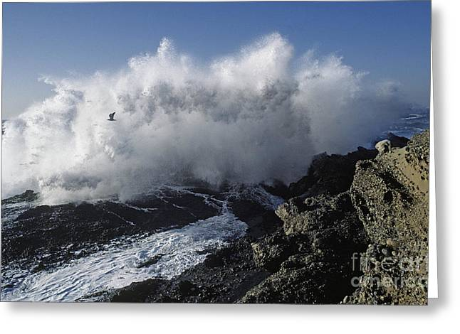 Point-lobos-9-5 Greeting Card by Craig Lovell