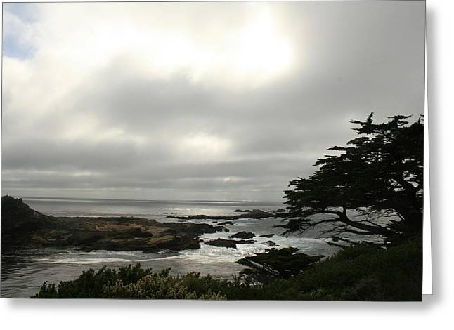 Point Lobos View Greeting Card by Suzanne Lorenz