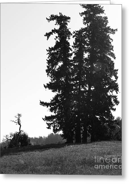Point Reyes California Landscape . 7d9749 . Black And White Greeting Card by Wingsdomain Art and Photography