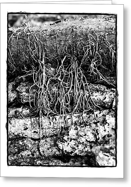 Poison Ivy Roots Greeting Card by Judi Bagwell