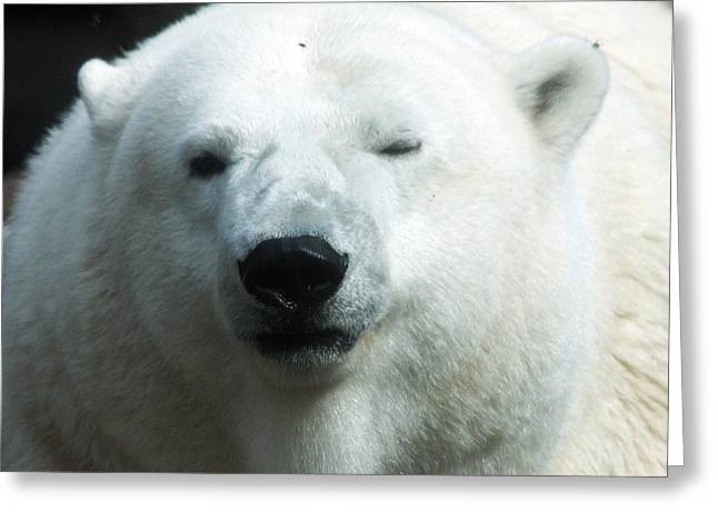 Greeting Card featuring the photograph Polar Bear - 0001 by S and S Photo