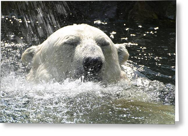 Polar Bear 4 Greeting Card