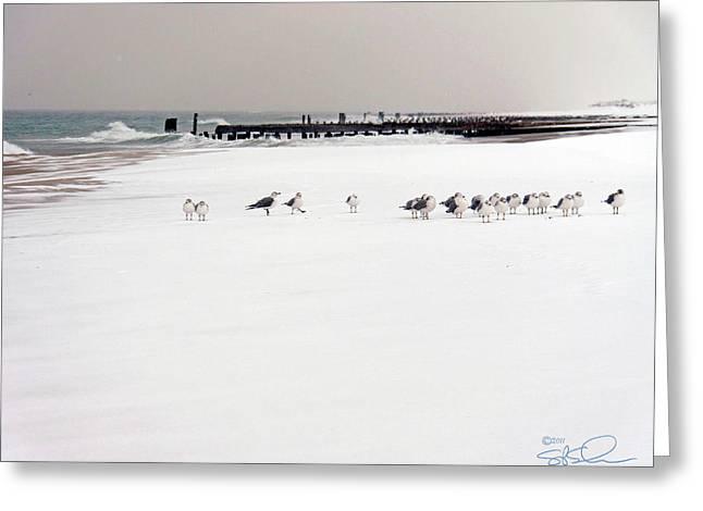 Polar Bird Club Greeting Card