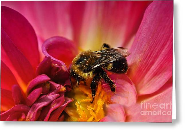 Pollen Covered  Greeting Card