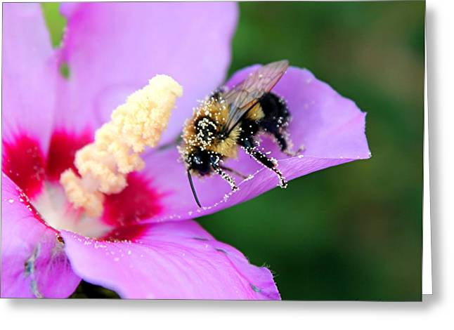 Greeting Card featuring the photograph Pollen Sprinkles by Laurinda Bowling