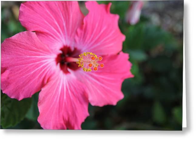 Pollinate Flower. Greeting Card by Giancarlo Sherman