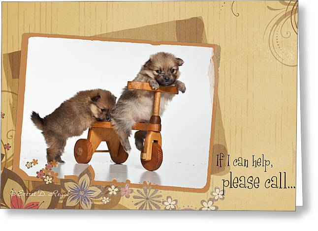 Pomeranian 1 Greeting Card by Everet Regal