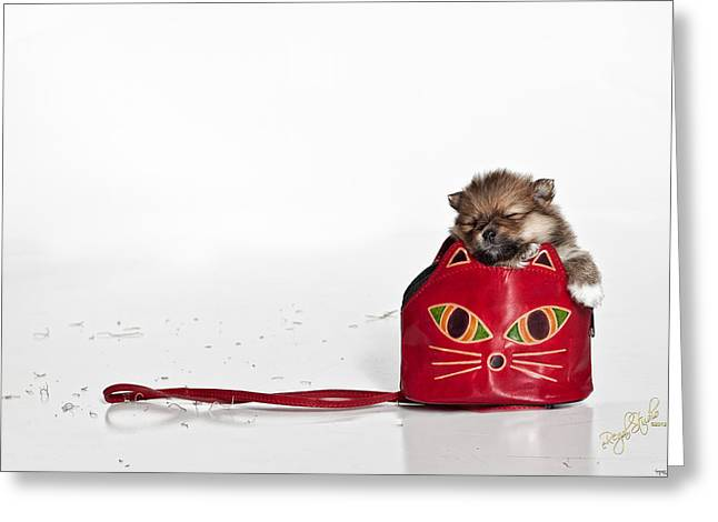 Pomeranian 2 Greeting Card by Everet Regal