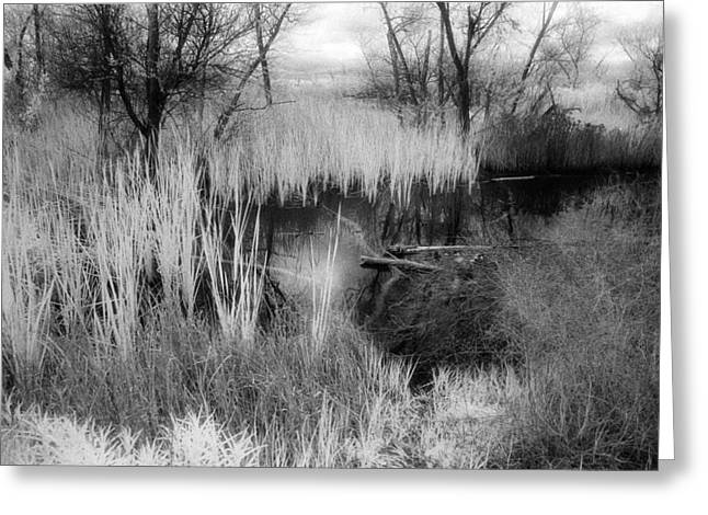 Pond Greeting Card by Mark Greenberg