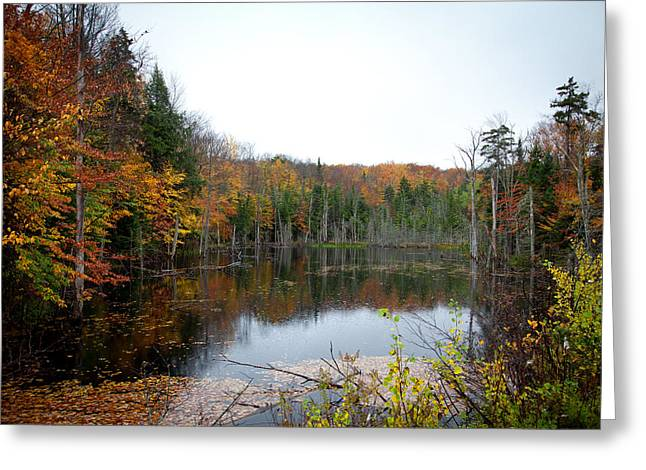 Pond On Limekiln Road In Inlet New York Greeting Card by David Patterson