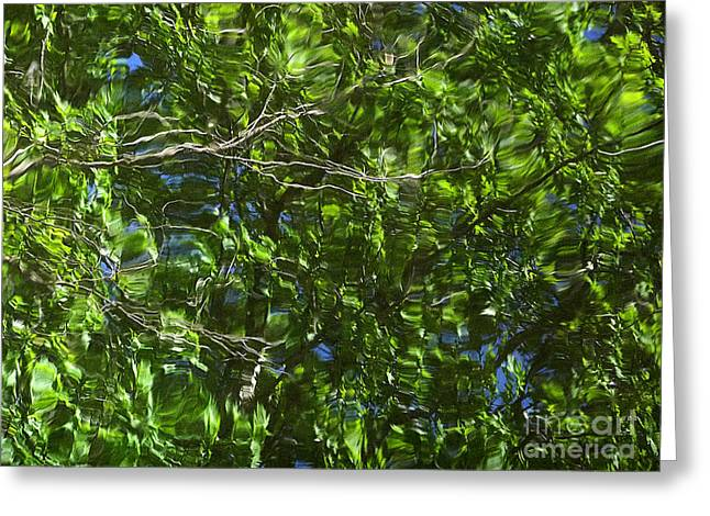 Pond Reflection 3 Greeting Card by Janeen Wassink Searles
