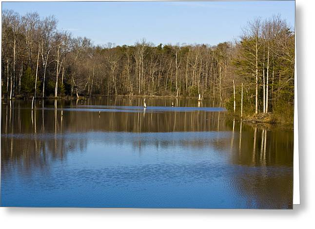 Pond Relflections Greeting Card by Terry Thomas