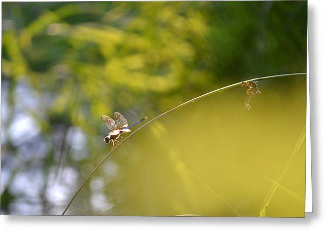 Greeting Card featuring the photograph Pond-side Perch by JD Grimes