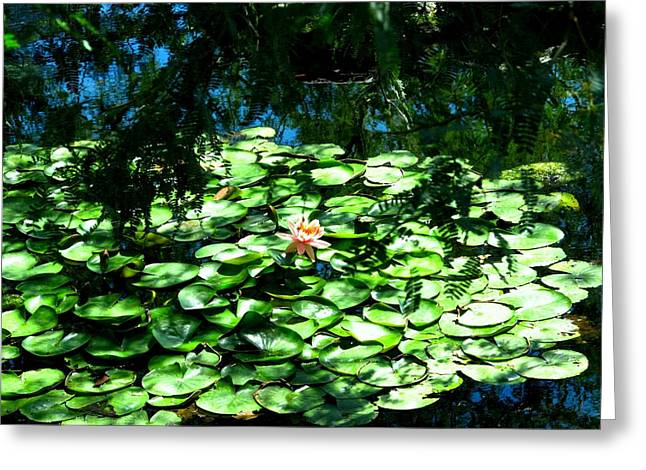 Pond With With Pond Lilly Greeting Card by David Killian
