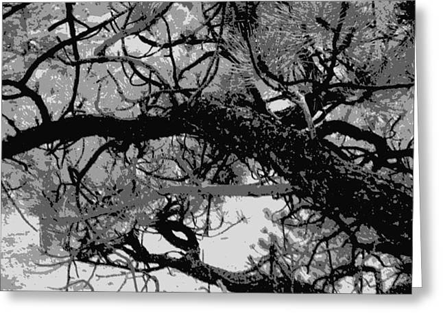Greeting Card featuring the photograph Ponderosa Pine by Rosemarie Hakim