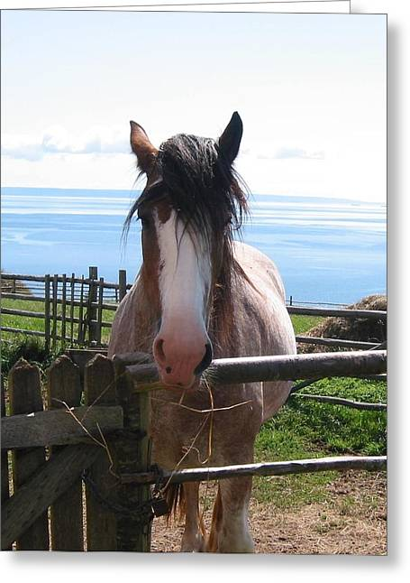 Pony At Highland Village Greeting Card