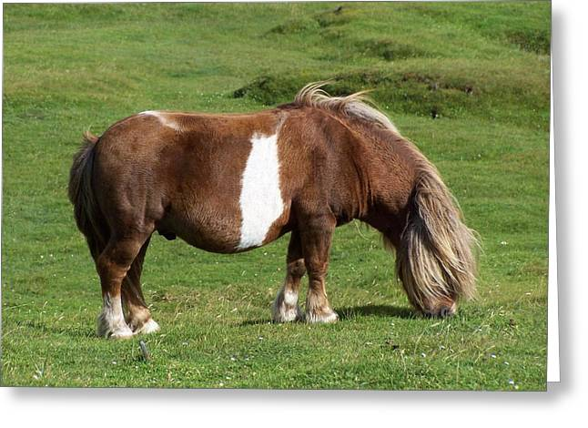 Pony Greeting Card by George Leask