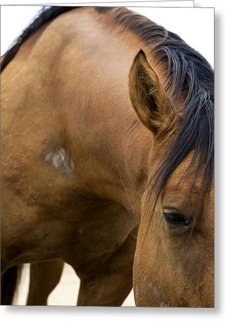 Greeting Card featuring the photograph Curious Pony by Lorraine Devon Wilke