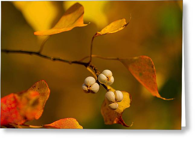 Greeting Card featuring the photograph Popcorn Tree by Dan Wells