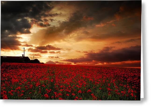 Greeting Card featuring the photograph Poppies At Dusk by John Chivers