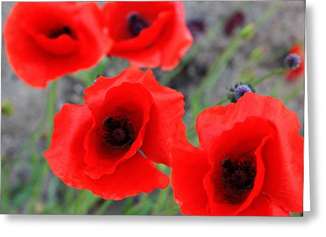 Poppies Of Stone Greeting Card by Empty Wall
