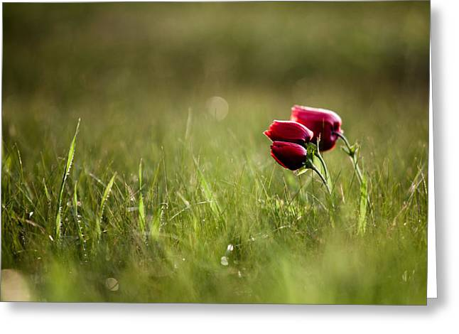 Popping Red Greeting Card by Victor Bezrukov